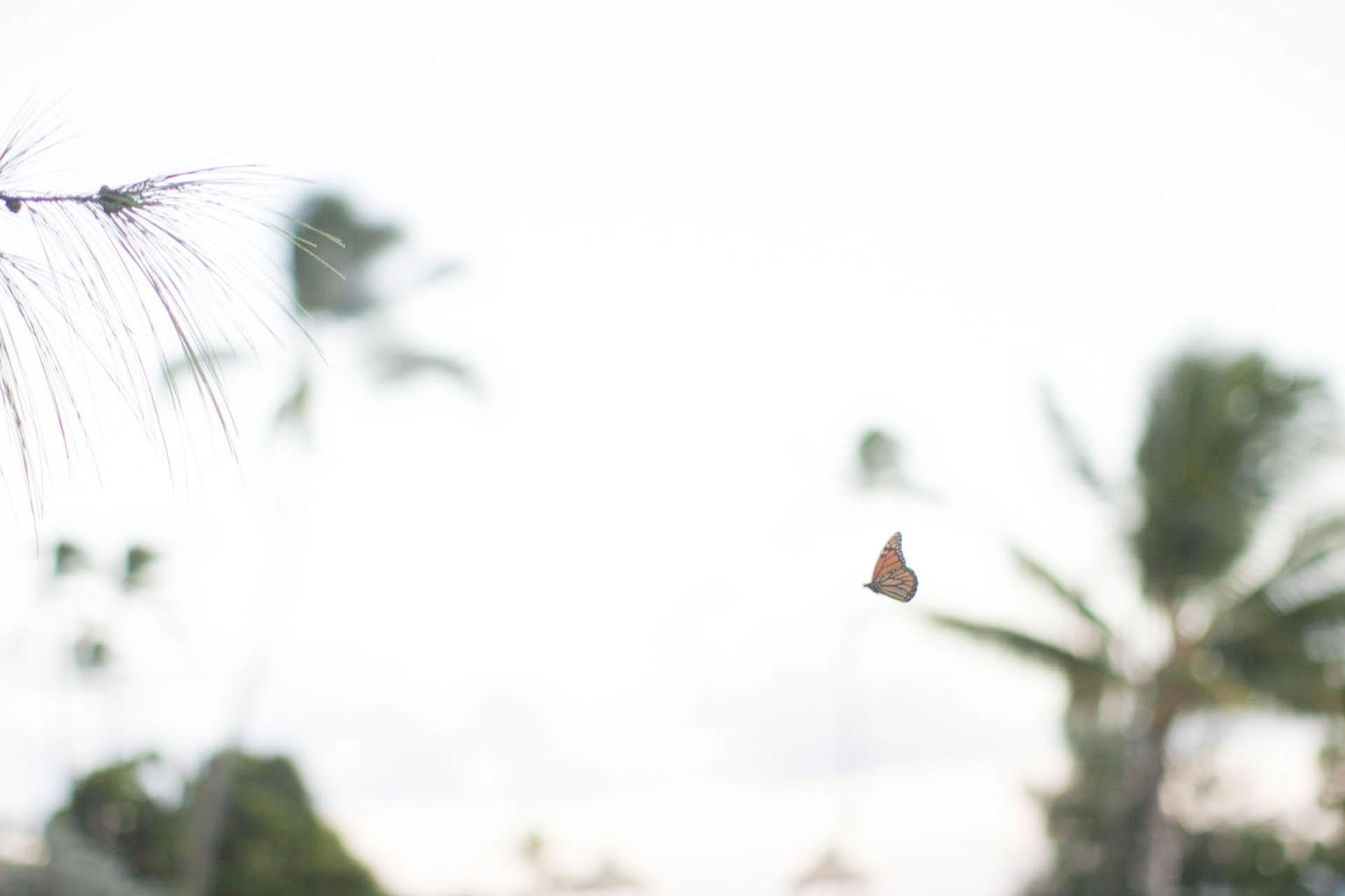 HawaiiWEBOct2014_008