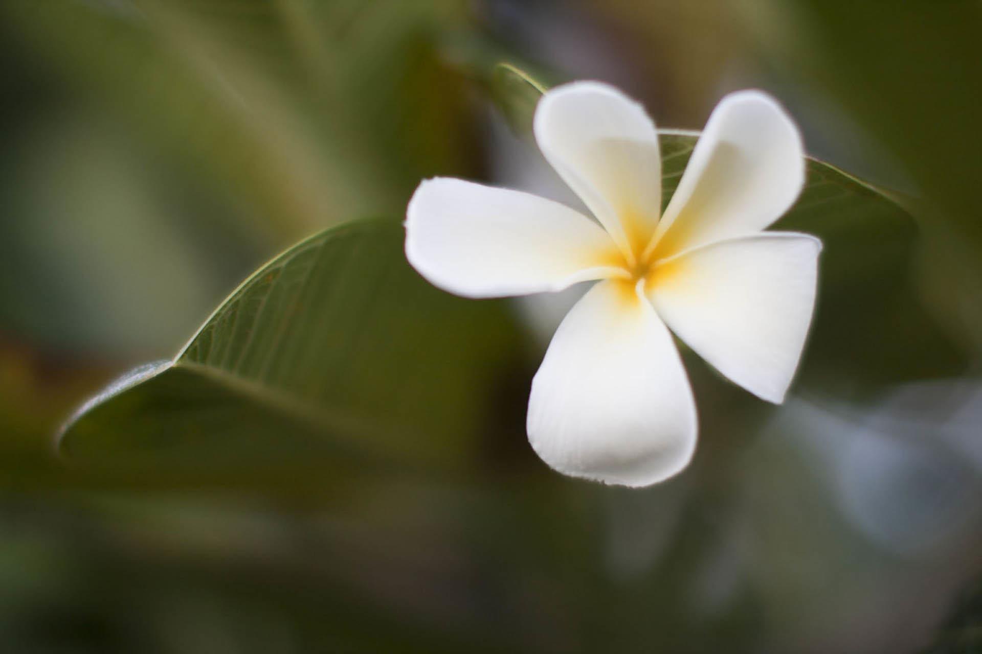 HawaiiWEBOct2014_018